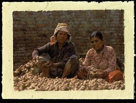 Ginger, Bhaktapur, Nepal, 2001.