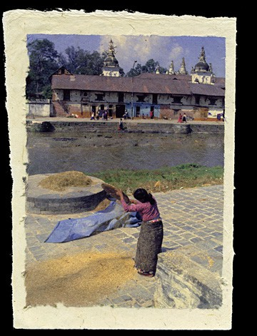 Threshing Rice, Pashupatinath Temple, Kathmandu, Nepal, 1993.